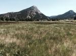 Wapiti Meadows
