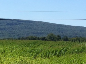 vineyards in the Finger Lakes