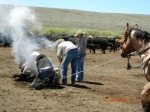 Watching branding in Nevada